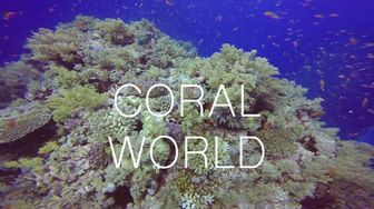 Coral world